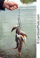 Fishing catch. - Fishing catch on the lake.
