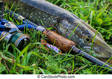 fishing catch pike on the grass and fishing gear