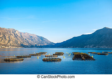 Fishing farm in Kotor bay, Montenegro. General plan with...