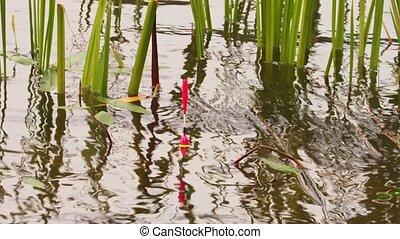 Fishing float in lake - Fishing rod float in lake