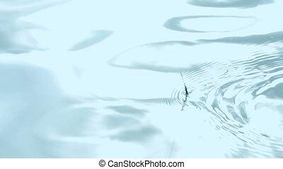 Fishing float sinking in blue water on lake - Fishing bobber...