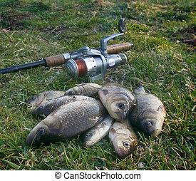 Fishing for Prussian carp