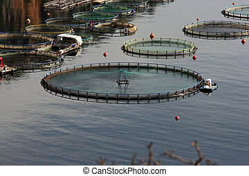 fishing industry - fish farm plant nature and industry...
