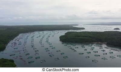 Fishing industry. Fish farming on an industrial scale. Aerial view of large scale traditional floating fish farms.