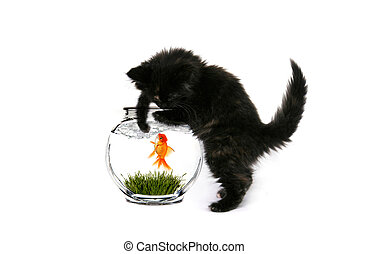 Fishing Kitty - Black Baby Kitten Curiously Playing With a...