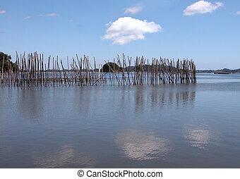 Fishing landscape - Landscape in a oyster fishing area, ...