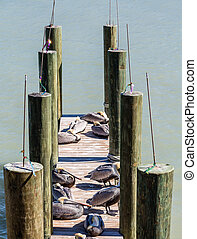 Fishing Poles and Pelicans