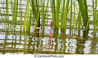 Fishing rod float in the water at the grass