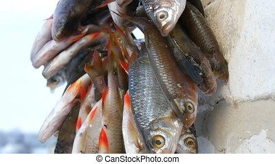 fishing., sécher, hiver, lotissements, fish, après, corde, ...