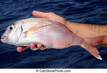 Fishing Trip - Bream in hand during a fishing trip