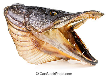 Fishing trophy. pike fish head over white background
