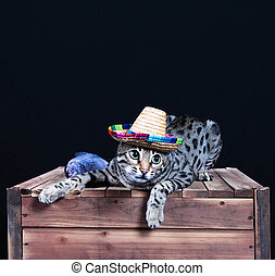 fishman cat in the wood