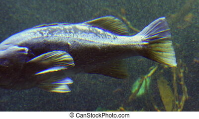 Fishtank exotic tropical fish moving under water - Beautiful...