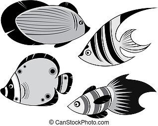fiskar, ocean