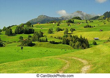 Fiss alp pasture 09