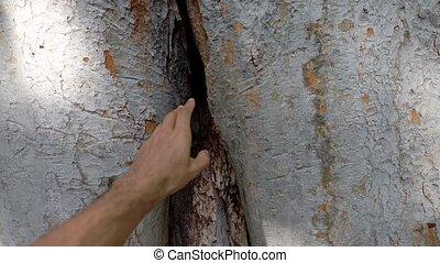 fissure, énorme, arbre, gauche, entrer, main