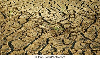fissures, ambiant, la terre, étang, sol, très, croûte, mort...