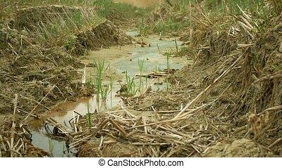 fissures, ambiant, la terre, chaleur, ruisseau, rivulet, sol...