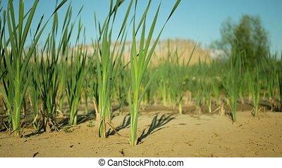 fissures, sec, climat, ambiant, croûte, sécheresse, mort, ...