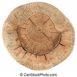fissures, vieil arbre, section, annuel, chêne, croix, texture, isolé, anneaux, blanc, rond
