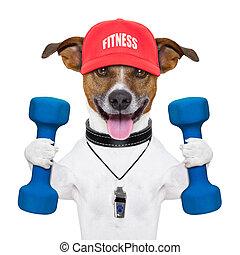 fitness, chien