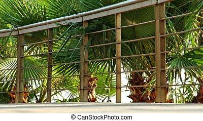 Fitness jogger running at tropical park fitness jogging...