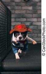 Fitness motivation funny joke. little dog dressed as a...