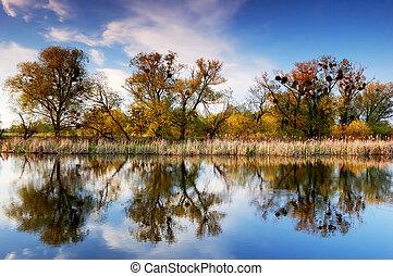 fiume, albero, banca