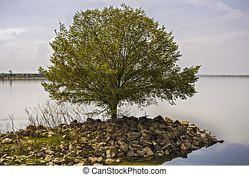 fiume, albero, isolato, banca