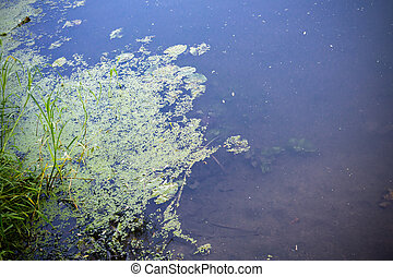 fiume, alga, superficie