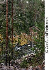 fiume, foresta