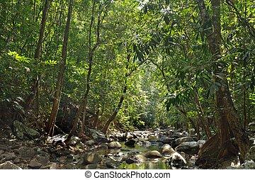 fiume, giungla