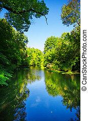 fiume, in, foresta