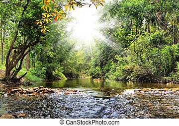 fiume, in, giungla, tailandia