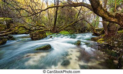 fiume, woods., correndo acqua, nature.
