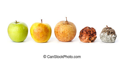 Five apples in various states of decay against white background