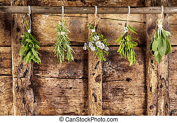 Five bunches of assorted fresh herbs hanging up - Five ...