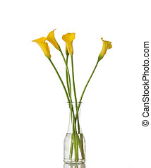 Five Calla Lilies in a Vase