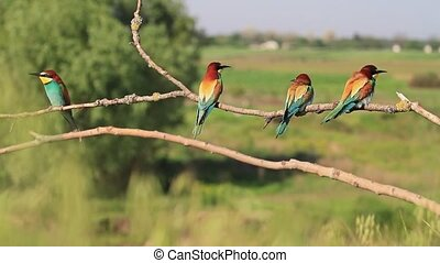 five colored bird sitting on a branch