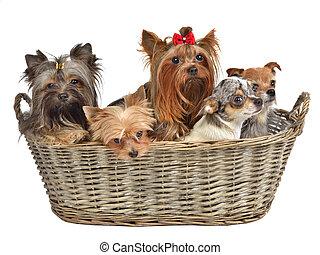 Five cute dogs in a basket