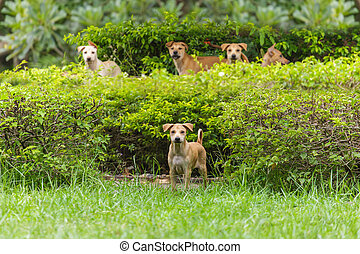 Five dogs in the park