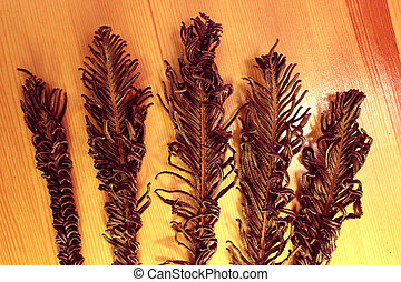 Five dried branches (Polypodiphyta) of fern.