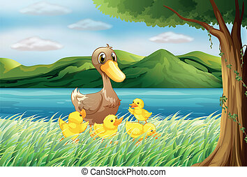 Five ducks at the riverbank - Illustration of the five ducks...