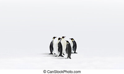 Emperor Penguins - Five Emperor Penguins in Antarctica