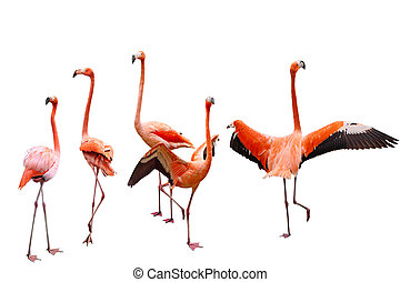 Five Flamingo - Set of five pink flamingo birds isolated on...