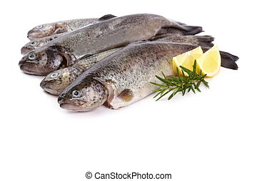 Five fresh rainbow trout on white background