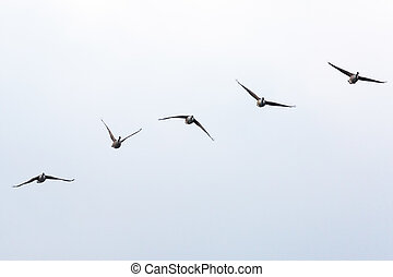 Five Geese Flying