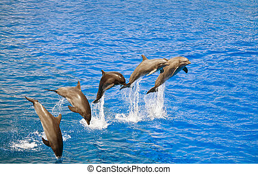 dolphins jumping out of the water - FIve happy dolphins ...