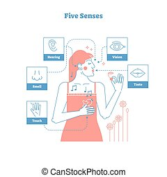 Five human senses, conceptual artistic outline style graphic design vector illustration poster with female and 5 senses icons - touch, smell, hearing, vision and taste.
