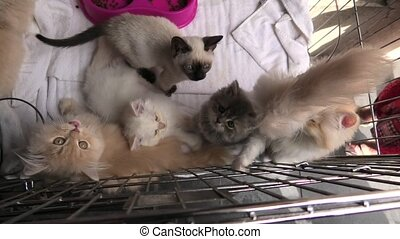 five kittens in cage looking and playing - Kittens in cage:...